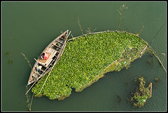 Perseverance [..Manikganj, Bangladesh..] (Catch the dream) Tags: above fish green up rural river landscape boat fisherman top bongo catch bengal soe bangladesh hyacinth bangla patience perseverance bengali bangladeshi bangali aplusphoto diamondclassphotographer flickrdiamond catchthedream gettyimagesbangladeshq2