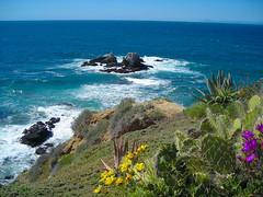 Laguna Coast (Talo66) Tags: ocean california plants coast spring rocks waves shore beaches orangecounty lagunabeach