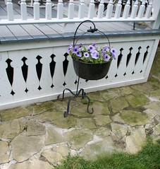 Cast Iron Hearth Pot with Handle (sunshinesyrie) Tags: flowers stone path cottage container pot porch hearth cottagestyle petunias stonepath hangingplant containergardening castironpot blackpot purplepetunias wooddetail paintedwhite romeomichigan whitepaintedporch hearthpot