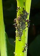 Bugs-2