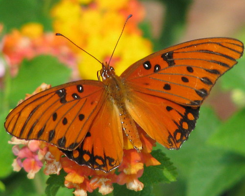 today in the butterfly garden