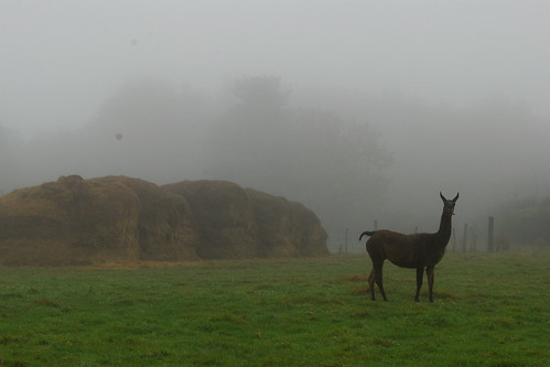 Llama in the mist