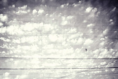_______*__ (Karen.Strolia) Tags: bird clouds 10 powerlines telephonelines layered fav10