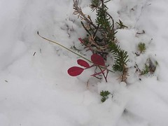 Lonely remaining red