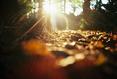 Lomo 04▸18 (ukaaa) Tags: autumn brown sun film analog forest 35mm lomo lca lomography woods fuji dof floor flat bokeh superia low ground surface depthoffield negative flare fujifilm pointandshoot analogue 135 leafs fujicolor superia200 ratseyeview
