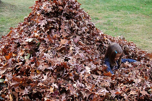 The biggest pile of leaves ever.