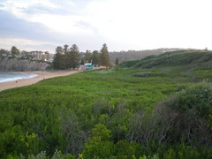 Highly vegetated dunes 1 (cobalt.penguin) Tags: beach dunes sydney peninsula avalon barranjoey