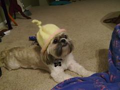 Indy Modeling Umbililical Cord Hat