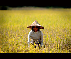 Shatang Farmer (Robert Lio) Tags: china field local farmer guangxi liuzhou shuting robertlio