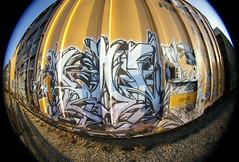 ROME (TRUE 2 DEATH) Tags: california railroad streetart rome train graffiti tag graf sigma fisheye railcar boxcar 8mm railways railfan freight fisheyelens gl ttx natrl sigmalens 8mmfisheye benching sigma8mmfisheye natrlgl