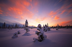 Winters Embrace (Wolfhorn) Tags: trees winter sunset sky snow cold nature alaska wilderness spruce verypeaceful
