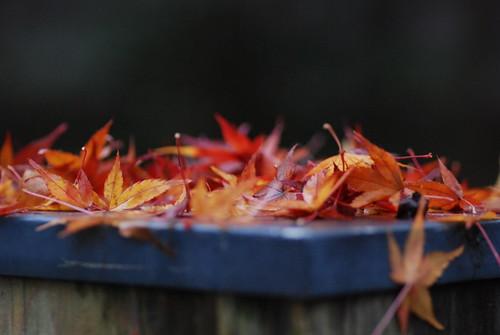 薬王院温泉寺の紅葉