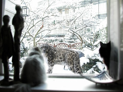 Winter Visitor ~(PETA34)~ (Gravityx9) Tags: winter cat photoshop peta chop amer jpos 120408 clevercreativecaptures oradaydm extremest modernimpressionists ruthscontests peta34