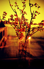 arrangement. (mr.moore) Tags: nyc sunset film rooftop brooklyn analog 35mm lomo lca lomography branches vase 2008 redscale