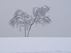 DSC04972 ....Schneebehangen....... (Niederrheiner) Tags: schnee winter work geotagged photography niederrheiner photobyniederrheiner natur working himmel photowalk 2008 sonydscf717 bume winterzeit winterberg winterlandschaft hochsauerland kahlerasten dunklewolken photographywork eisundschnee geo:lon=8488837 geo:lat=51180769