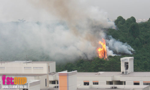 Bukit Batok bushfire a surreal experience for fire safety engineer