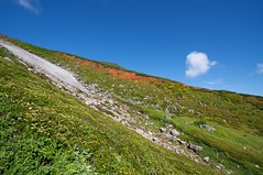 紅葉とツガザクラの第三雪渓
