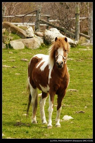 Jennifer, the (prissy) pony.