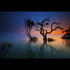 Escape from Reality (Garry - www.visionandimagination.com) Tags: blue sunset red tree nature water landscape bay dusk tide mangrove escapefromreality cameradeourobrasil flickrdiamond citrit