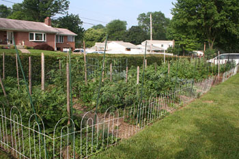 The main vegetable garden