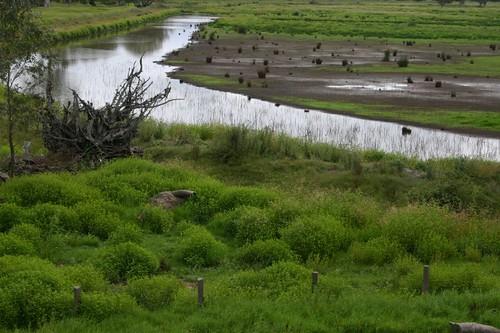 Victorian waterways...Near Yarram.