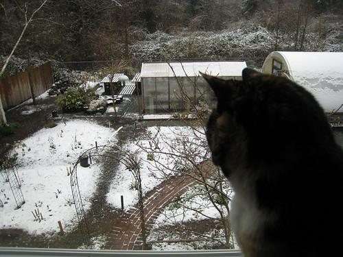 Cat Conteplation