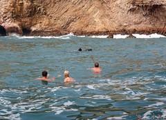 Wildlife Swim (more on the video) (Pierre♪ à ♪VanCouver) Tags: islasballestas paracas peru wildlife ica peruvianimages lobosdemar pérou liondemer