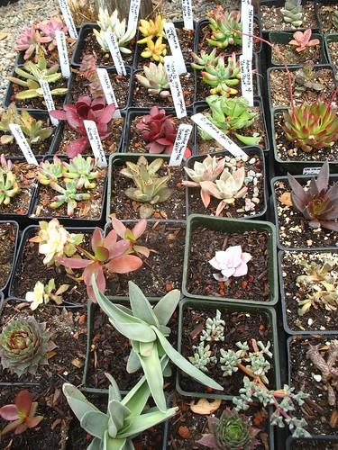 Gamble Garden plant sale (Palo Alto, CA)