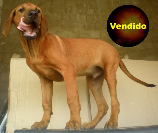 080406_Baduzinho_08_Vendido_Small