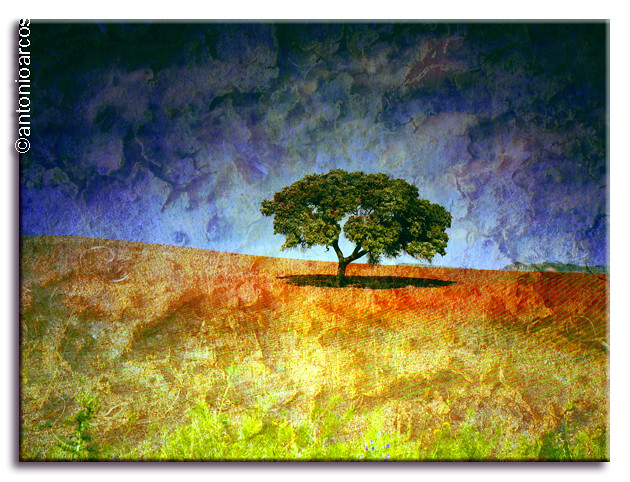 Colourful&TexturedTree. by AntonioArcos aka fotonstudio