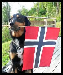 Jølle og flagg