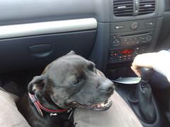Matilda in Kevin's car