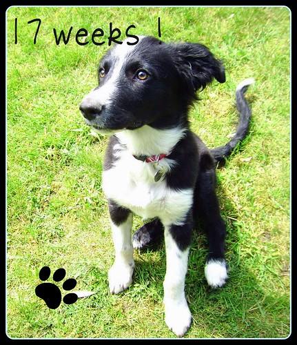 17 weken oud !