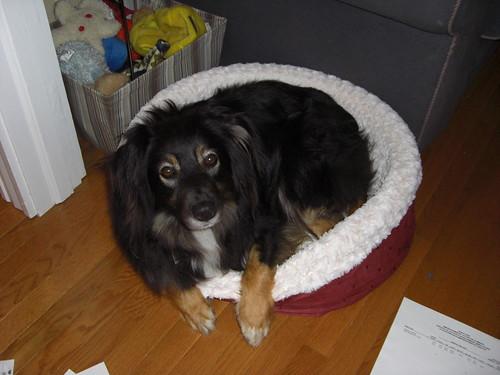 The Murph in His Bed