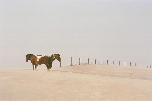 Pony Minimalism