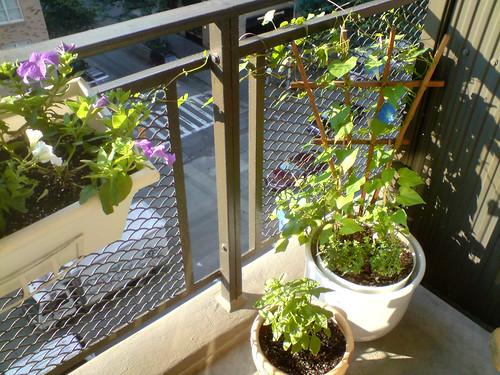 Balcony 2008 - nice!