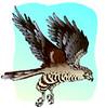 hawk (3doel82) Tags: fish bird animals insect gambar koleksi ikan belajar burung binatang carnivora serangga mamalia amphibi