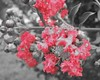 Color Accent No. 2 (mybluebirdgifts) Tags: blackandwhite plant flower color colour nature floral shop digital print botanical outside photography photo intense colorful bright blossom picture photograph bloom colourful etsy exquisite bold coloraccent exquisiteimage