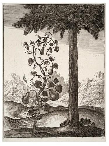 14- La calabaza y el pino