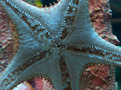 Living Seas : Starfish : Epcot
