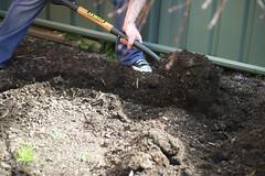 211/365 (traviswalton) Tags: garden vegetable dirt spade 365days dugahole