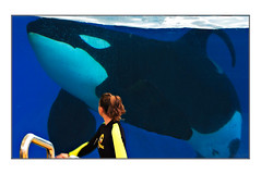 Two media, same friendship (CdePaz) Tags: parque animals orca orcas loro zoos acuarios