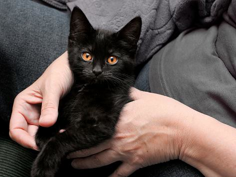foster a cat or kitten at black cat rescue