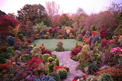Red dawn in upper garden - autumn October 25 (Four Seasons Garden) Tags: flowers autumn west flower colour english fall nature beautiful marie stone gardens garden four maple day all colours open seasons picture peaceful tony foliage fourseasons begonia newton begonias tapestry walsall midlands flowergarden ngs nationalgardenscheme yorkstone fourseasonsgarden wonderfulworldofflowers