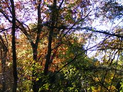 DSCF2676 (B.J. Taylor) Tags: autumn butterfly texas fallcolor trails butterflies bluebonnet trail lizards redoak juniper cattail cedarhill escarpment pricklypearcactus cottonwoodcanyon cedarridgepreserve littlebluestem possumhaw cedarbrake audubondallas fossilvalley cattailpond