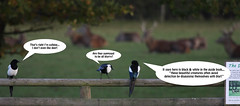 the magpie family day out (felt_tip_felon) Tags: birds funny comedy flock feathers humour deer magpies caption speechbubbles