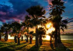 let your love flow - true colors (Kris Kros) Tags: ocean california ca sunset shadow sun tree love wa
