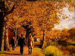 All is right with the world (Steve-h) Tags: autumn trees ireland people dublin brown man black leaves reeds gold women shadows beggar brickwall finepix fujifilm lockgates grandcanal towpath steveh s100fs favemoifrance