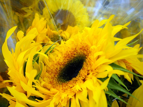 Sunflowers by Rosa Say on Flickr