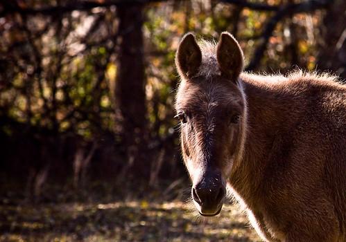 Random farm horse